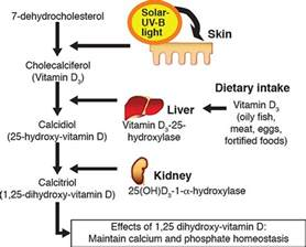 100 uvb l vitamin d3 100 images 200 iu needed to increase vitamin d levels by 1 ng not 100
