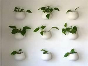Pflanzen An Der Wand : h ngende pflanzen als indoor dekoration ~ Markanthonyermac.com Haus und Dekorationen