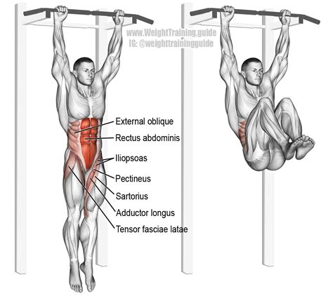 hanging leg and hip raise one of the most effect exercises see website for details