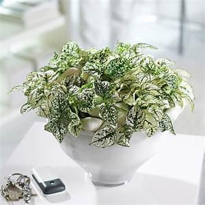 Pflanzen Zu Hause : bloom 39 s wohnen mit pflanzen stilvolle dekoideen f rs zuhause ~ Markanthonyermac.com Haus und Dekorationen
