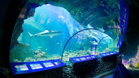 aquarium sea d 233 couvrez munich avec expedia fr