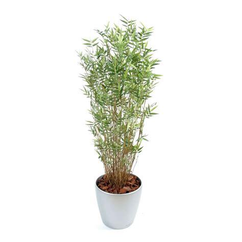 bambou semi naturel en pot rond elementvegetal grossiste en plantes