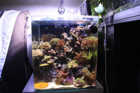 aquarium eau de mer nano 60 l