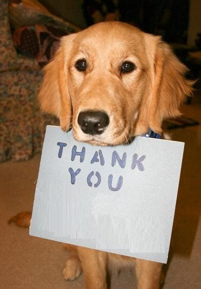 The World's Top 10 Best Images Of Dogs Saying Thank You Paperblog