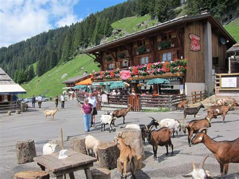 morzine on the alps in summer and chalet in morzine 187 elainer in and out of scotland