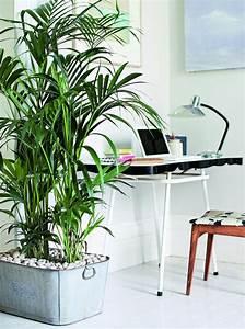Zimmerpflanze Lange Grüne Blätter : welche zimmerpflanzen brauchen wenig licht ~ Markanthonyermac.com Haus und Dekorationen
