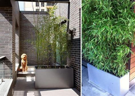bambou en pot brise vue naturel et d 233 co sur la terrasse small balcony decor verandas and