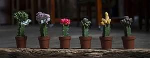 Cactus - Oriental Online