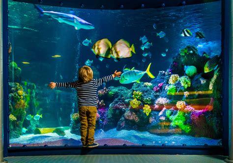 quel est le meilleur aquarium poisson et comment le choisir comparatif avis et tests