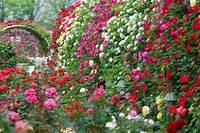 nice rose garden design Rose Garden Design, Planning A Rose Garden