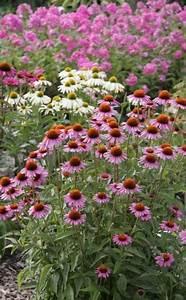 Sichtschutz Pflanzen Blühend : die 25 besten ideen zu sukkulentengarten auf pinterest sukkulenten pflanzen und vermehrungs ~ Markanthonyermac.com Haus und Dekorationen