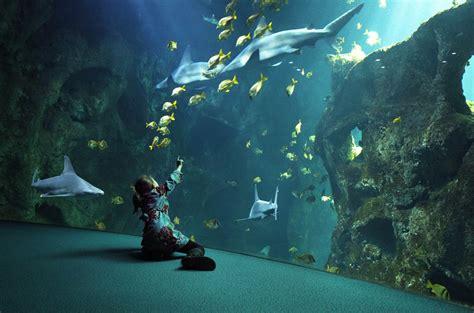 un week end famille 224 la d 233 couverte des plus beaux aquariums de