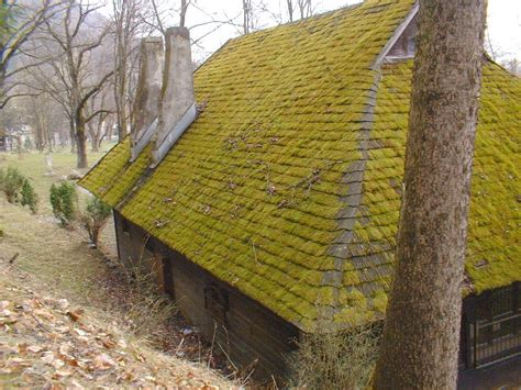 "Moss Covered Roofs Not Always ""green""' Ameristar Roofing Restoration Llc Richmond Tx Easy Heat Roof And Gutter De Icing Kit Reviews Tpo Flat Materials Standing Seam Metal Details Supply Tucson Types Of Sheets In Ghana Roofers Brockton Ma Epdm Rubber Repair"