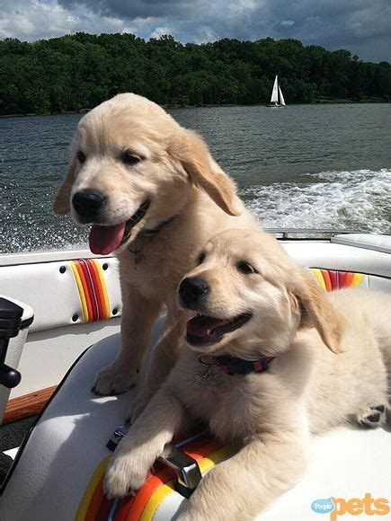 Boat Dog Quotes by 154 Best Dogonboard Images On Pinterest Doggies Puppys
