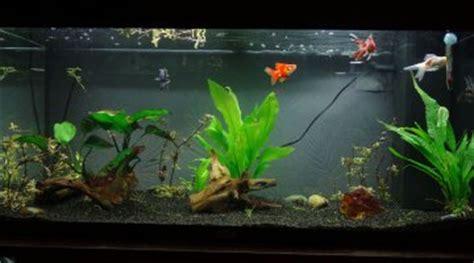 am 233 nagement 80l pour poisson japonais