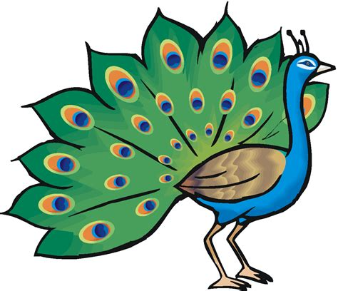 Free Free Peacock Clipart, Download Free Clip Art, Free