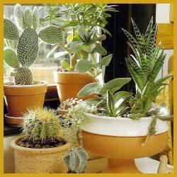 Pflanzen Zu Hause : pin von timea auf pflanzen f r zu hause pinterest zimmerpflanzen pflanzen und wohnzimmer ~ Markanthonyermac.com Haus und Dekorationen