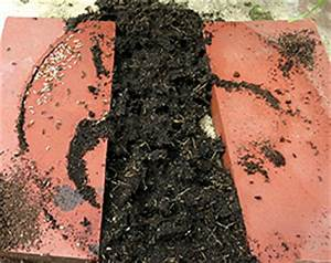 Hilft Mehl Gegen Ameisen : ameisen bek mpfen was hilft gegen ameisen in haus und garten philognosie ~ Whattoseeinmadrid.com Haus und Dekorationen