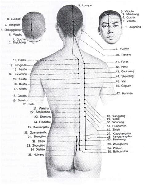 le m 233 ridien de la vessie et tendino musculaire acupuncture et naturopathie