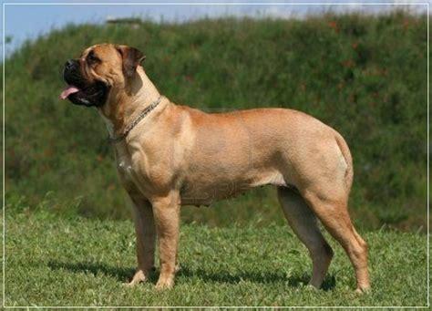 20 low maintenance breeds