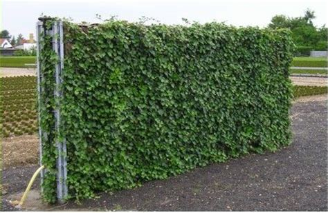 murs anti bruit set green des solutions vertes pour embellir votre ext 233 rieur jardin