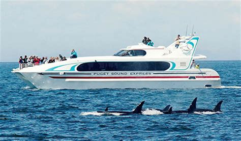 Private Boat Tours In Seattle by Seattle Whale Watching Tours Puget Sound Express