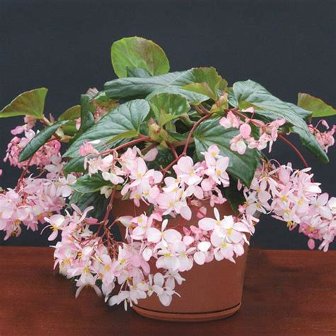 Top Fragrant Houseplants  Fragrance, Green Leaves And Plants