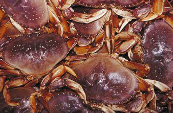 Crab Boat Jobs Salary by Salary Per Year For A Crab Fisherman Chron