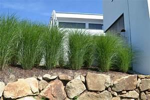 Alternative Zu Gras Garten : sichtschutz garten pinterest sichtschutz hecken und au enanlagen ~ Markanthonyermac.com Haus und Dekorationen