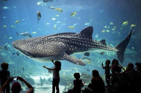 b 233 lugas russes captur 233 s pour le aquarium en 2005