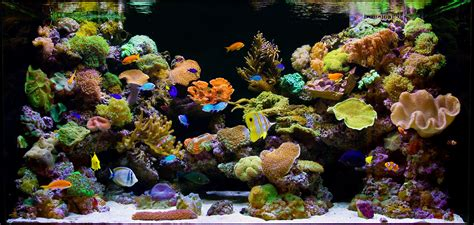 saltwater aquarium coral here is a list of 15 easy salt water aquarium reef corals that can be