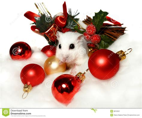 dwerg hamster onder de decoratie kerstmis stock afbeelding afbeelding 9810501