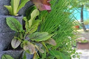 Pflanzen An Der Wand : vertikale mischkultur urban garden an der wand nathalie 39 s pflanzenwand ~ Markanthonyermac.com Haus und Dekorationen