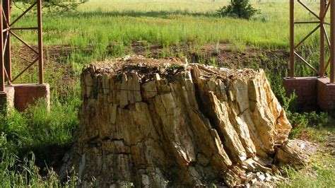 florissant fossil beds florissant fossil beds national monument in florissant