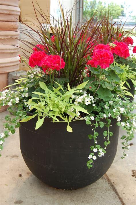 schaefer greenhouses how to plant a patio pot container garden