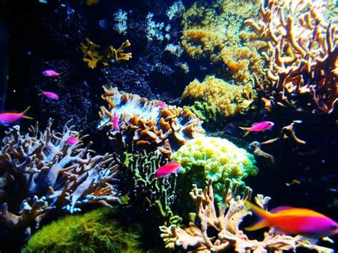 aquarium du cap d agde cap d agde top tips before you go tripadvisor