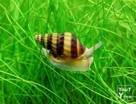 escargot mangeur d escargot anentome helena bruxelles 1000 toutypasse be