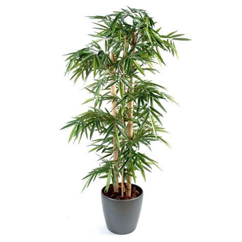 bambou plante