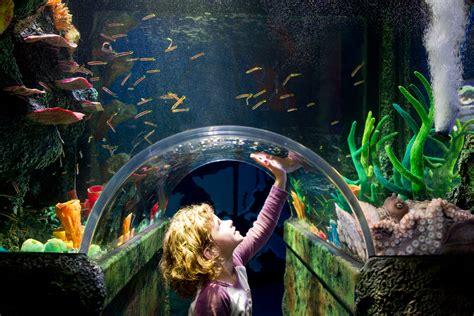 sea melbourne aquarium prices discount tickets