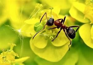 Hilft Mehl Gegen Ameisen : ameisen im garten was gegen ungebetene krabbler hilft ~ Whattoseeinmadrid.com Haus und Dekorationen