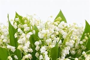 Garten Im Mai : ihr garten im mai tipps tricks gartenbew sserung raintime gmbh ~ Markanthonyermac.com Haus und Dekorationen