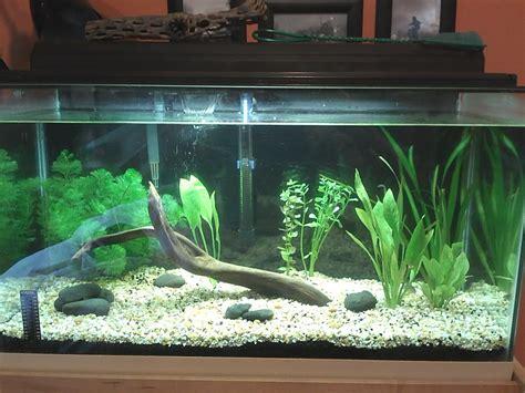 design aquarium 100l jardiland metz 11 aquarium de la