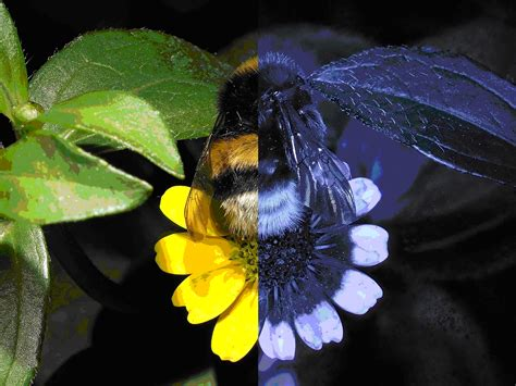 are bees color blind worth a thousand words everyone the plos one