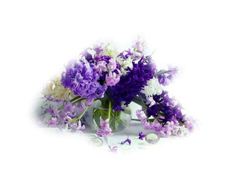 pot transparent pour orchidee 28 images orchidee pot transparent ou pas 28 images mes fleurs
