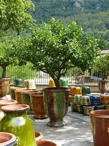 Mediterraner Garten Winterhart : die pflege von zitruspflanzen standort d ngen gie en berwintern ~ Markanthonyermac.com Haus und Dekorationen