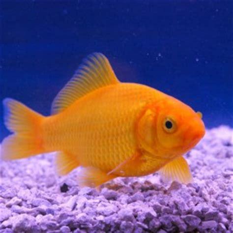 poissons d aquarium etangs d occitanie