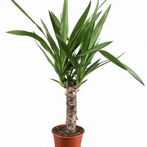 Welche Fliesengröße Für Welche Raumgröße : welche pflanzen sind f r das schlafzimmer besonders geeignet ~ Markanthonyermac.com Haus und Dekorationen