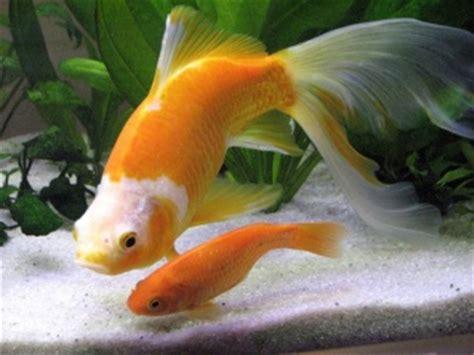 quels poissons choisir pour un petit aquarium aquariums et vivariums forum animaux