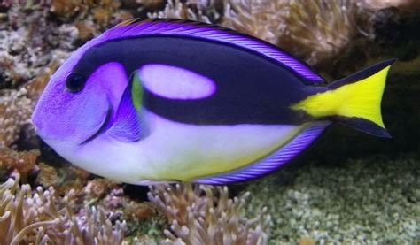 aquarium de dunkerque dunkerque parc animalier ferme aquarium