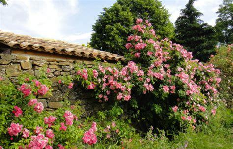 planter un rosier en pot 28 images quand et comment planter un rosier dans jardin bricoleur